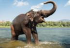 Почему слоны не болеют раком?