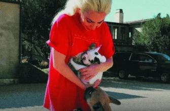Кто украл собак Леди Гаги?